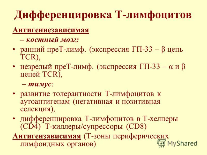 Онтогенез Т-лимфоцитов