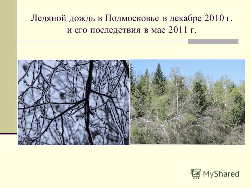 Ледяной дождь в Подмосковье в декабре 2010 г. и его последствия в мае 2011 г.