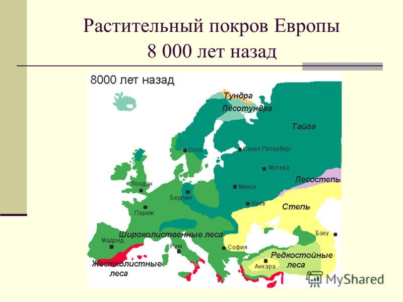 Растительный покров Европы 8 000 лет назад