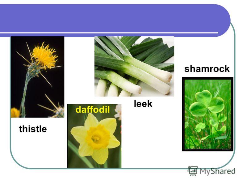 thistle daffodil leek shamrock