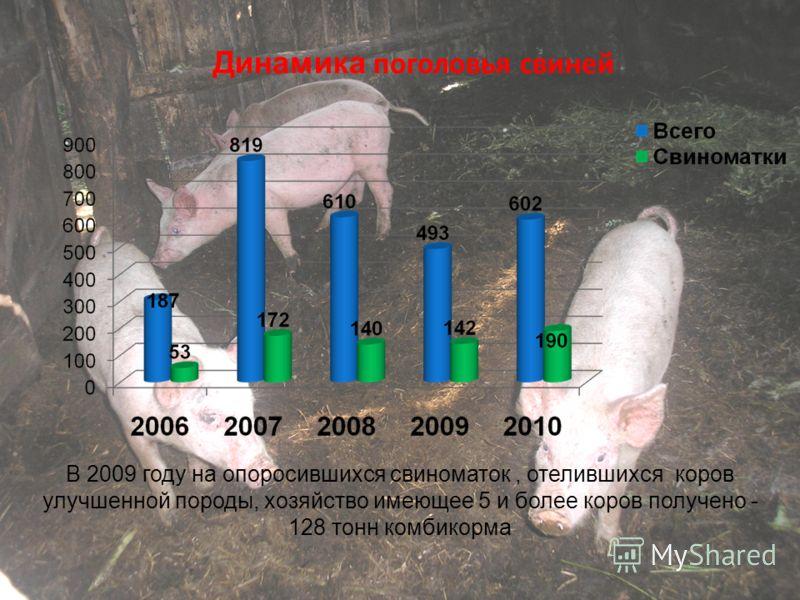 Динамика поголовья свиней В 2009 году на опоросившихся свиноматок, отелившихся коров улучшенной породы, хозяйство имеющее 5 и более коров получено - 128 тонн комбикорма