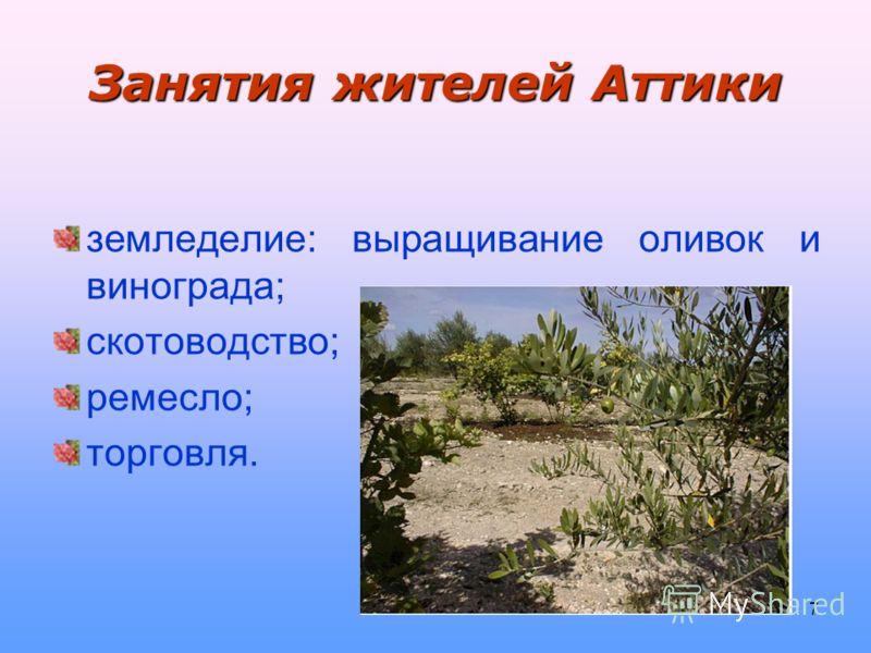 7 Занятия жителей Аттики земледелие: выращивание оливок и винограда; скотоводство; ремесло; торговля.