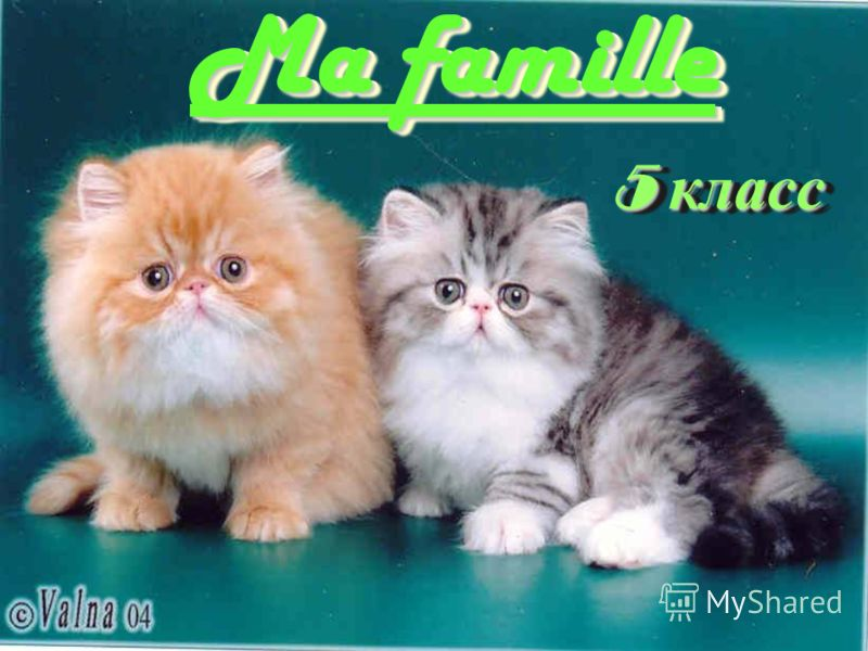 5 класс Ma famille