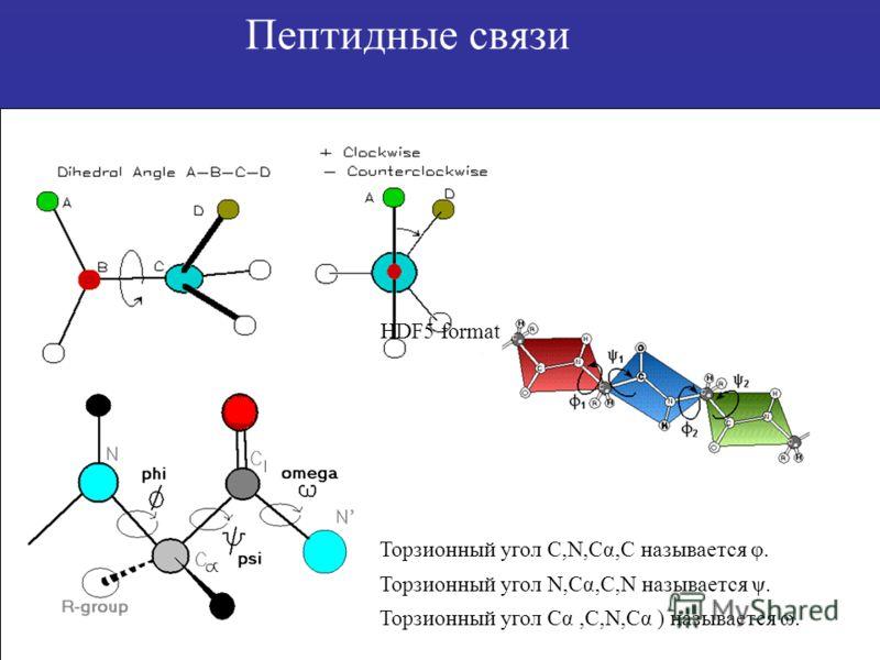 Пептидные связи Торзионный угол C,N,Cα,C называется φ. Торзионный угол N,Cα,C,N называется ψ. Торзионный угол Cα,C,N,Cα ) называется ω. HDF5 format