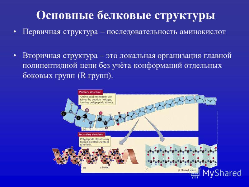Основные белковые структуры Первичная структура – последовательность аминокислот Вторичная структура – это локальная организация главной полипептидной цепи без учёта конформаций отдельных боковых групп (R групп).