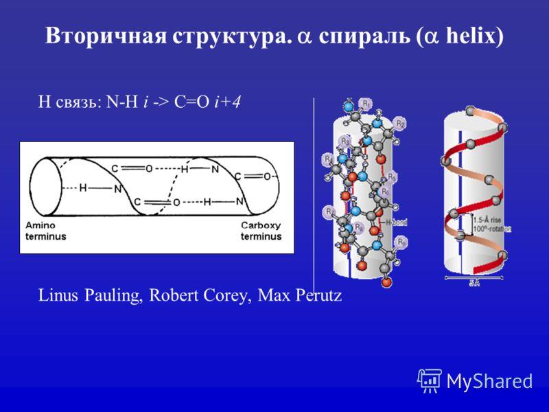 Вторичная структура. спираль ( helix) H связь: N-H i -> C=O i+4 Linus Pauling, Robert Corey, Max Perutz