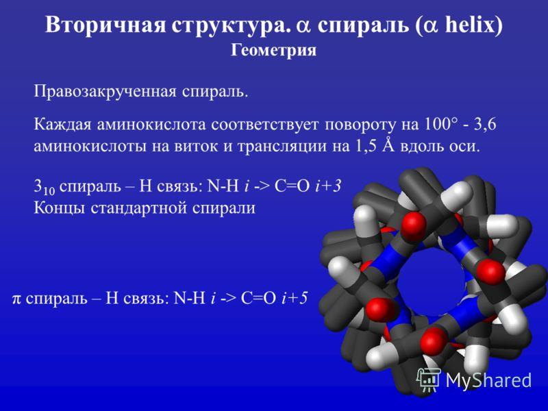 Правозакрученная спираль. Каждая аминокислота соответствует повороту на 100° - 3,6 аминокислоты на виток и трансляции на 1,5 Å вдоль оси. Вторичная структура. спираль ( helix) Геометрия 3 10 спираль – H связь: N-H i -> C=O i+3 Концы стандартной спира