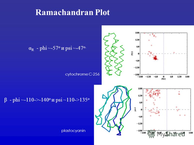 Ramachandran Plot α R - phi ~-57 o и psi ~-47 o. cytochrome C-256 β - phi ~-110->-140 o и psi ~110->135 o plastocyanin