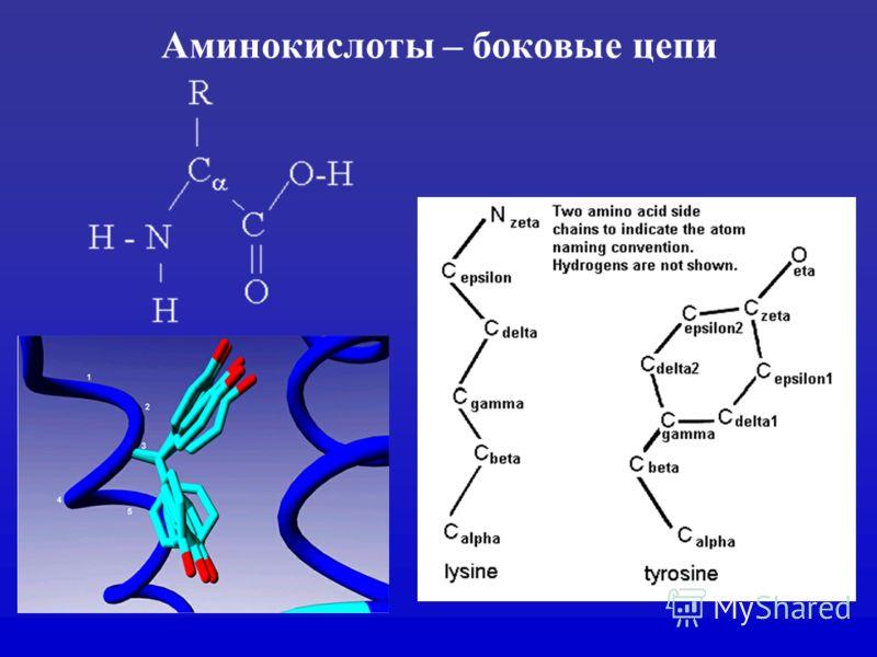 Аминокислоты – боковые цепи