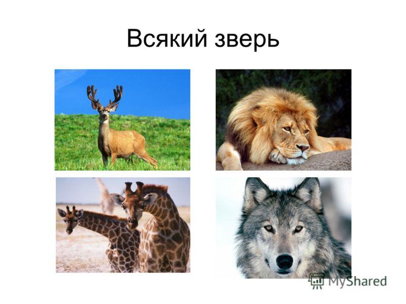 Всякий зверь
