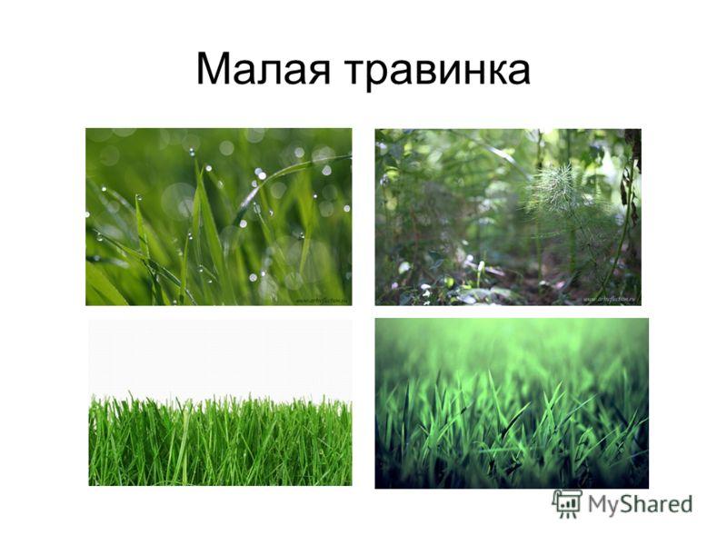 Малая травинка