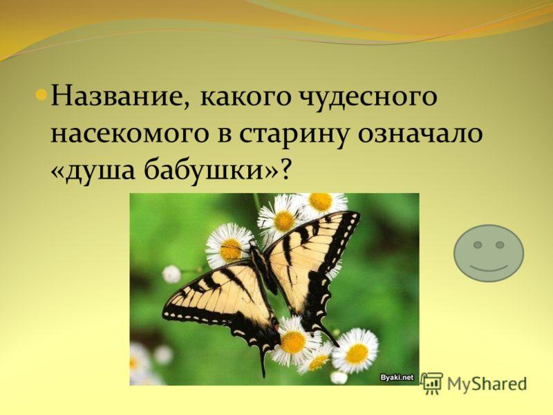 Название, какого чудесного насекомого в старину означало «душа бабушки»?