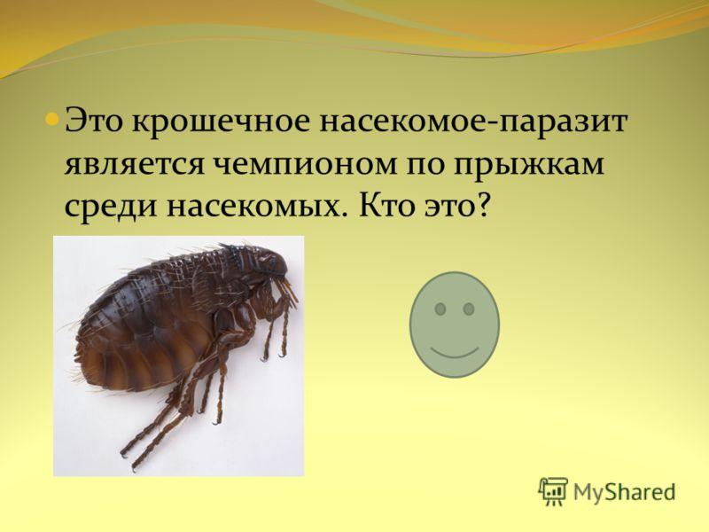 Это крошечное насекомое-паразит является чемпионом по прыжкам среди насекомых. Кто это?
