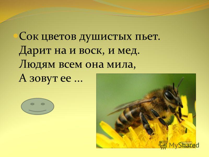 Сок цветов душистых пьет. Дарит на и воск, и мед. Людям всем она мила, А зовут ее...