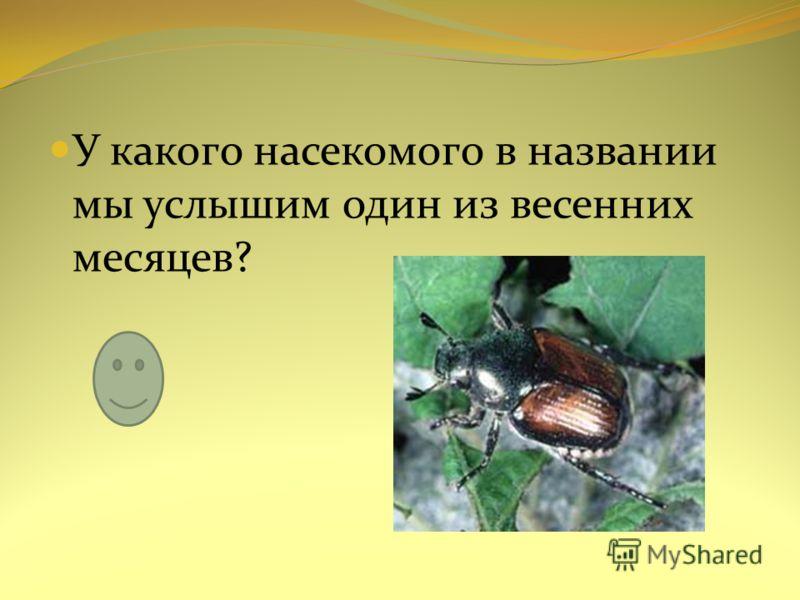У какого насекомого в названии мы услышим один из весенних месяцев?