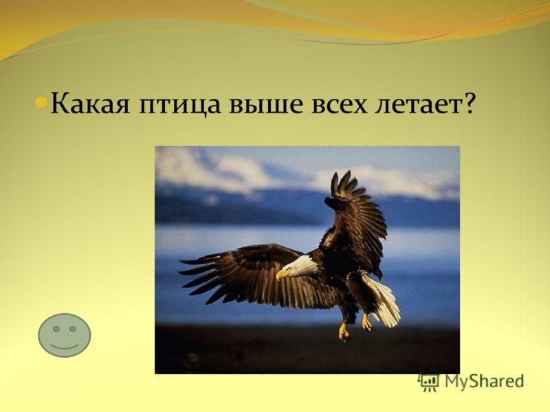 Какая птица выше всех летает?
