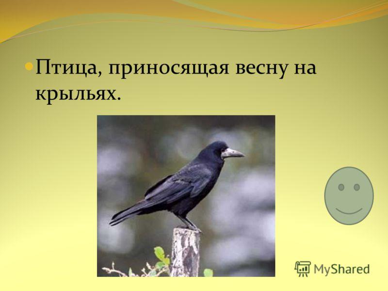 Птица, приносящая весну на крыльях.