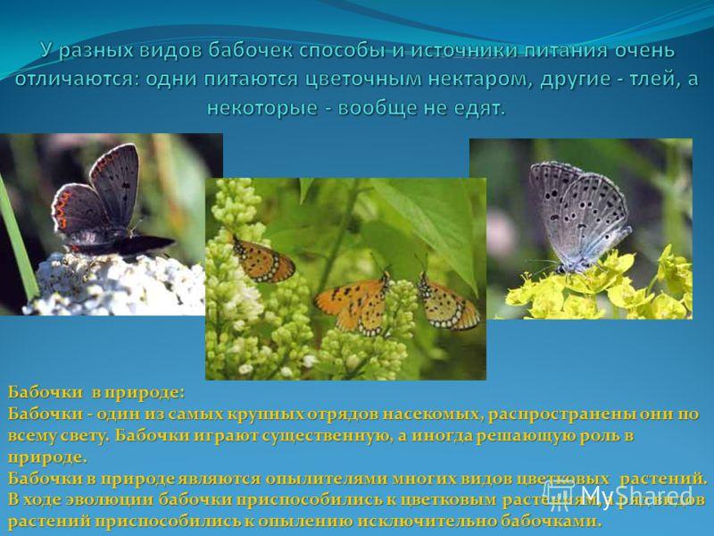 Бабочки в природе: Бабочки - один из самых крупных отрядов насекомых, распространены они по всему свету. Бабочки играют существенную, а иногда решающую роль в природе. Бабочки в природе являются опылителями многих видов цветковых растений. В ходе эво