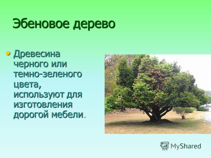 Эбеновое дерево Древесина черного или темно-зеленого цвета, используют для изготовления дорогой мебели. Древесина черного или темно-зеленого цвета, используют для изготовления дорогой мебели.