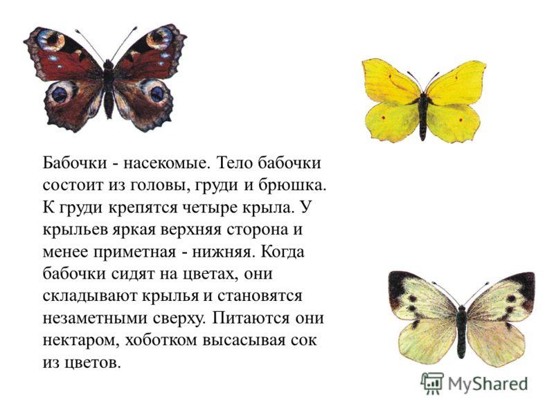 Бабочки - насекомые. Тело бабочки состоит из головы, груди и брюшка. К груди крепятся четыре крыла. У крыльев яркая верхняя сторона и менее приметная - нижняя. Когда бабочки сидят на цветах, они складывают крылья и становятся незаметными сверху. Пита