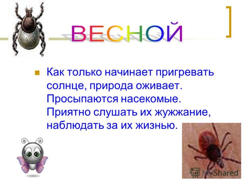 Как только начинает пригревать солнце, природа оживает. Просыпаются насекомые. Приятно слушать их жужжание, наблюдать за их жизнью.