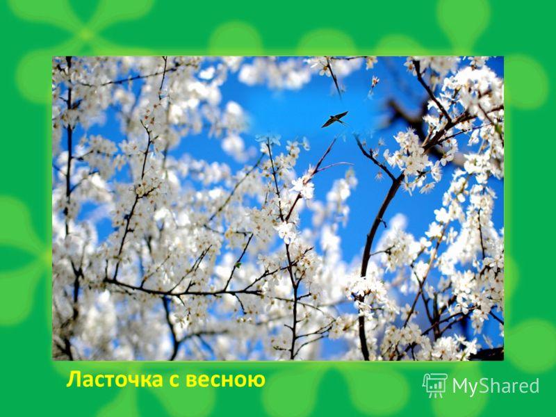 Ласточка с весною