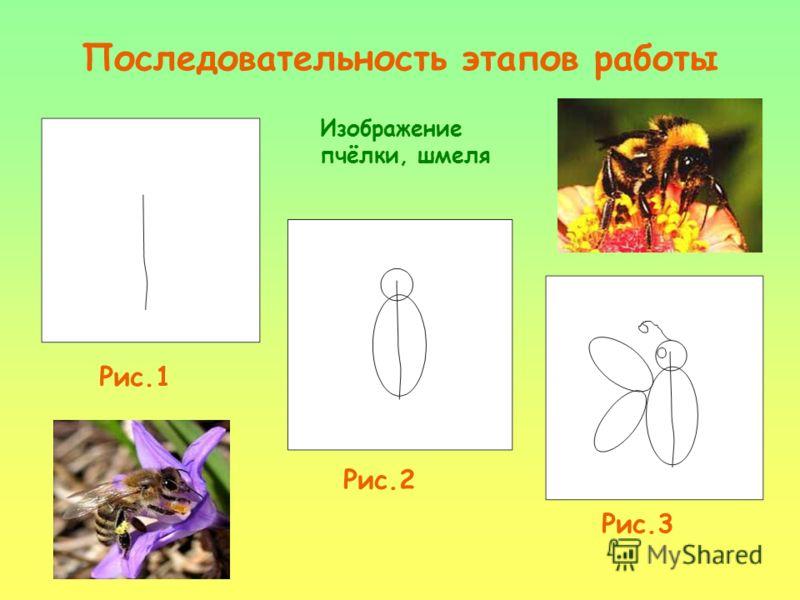 Последовательность этапов работы Рис.1 Рис.2 Рис.3 Изображение пчёлки, шмеля