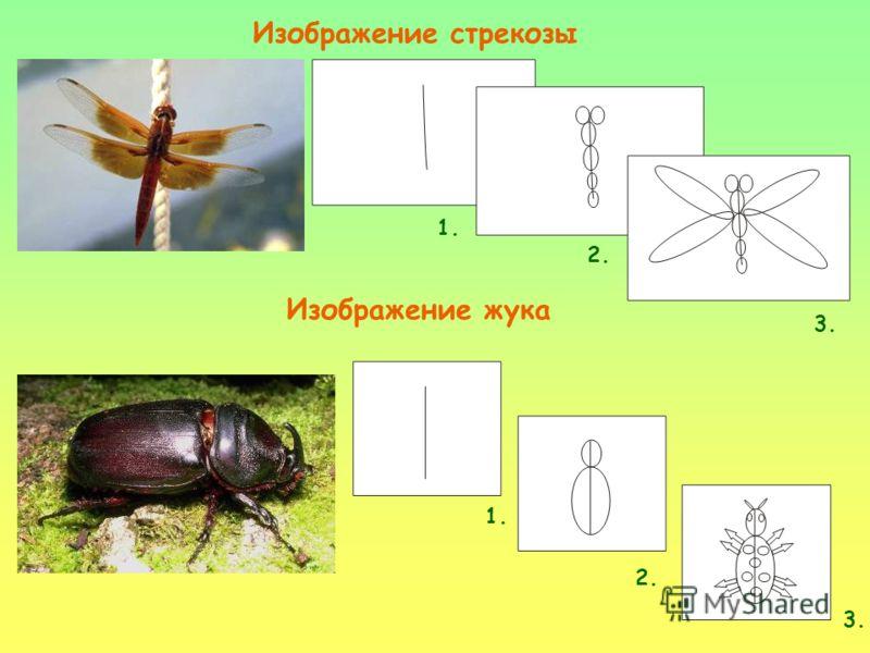 Изображение стрекозы 1. 2. 3. Изображение жука 1. 2. 3.