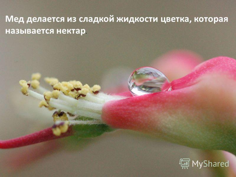 Мед делается из сладкой жидкости цветка, которая называется нектар.