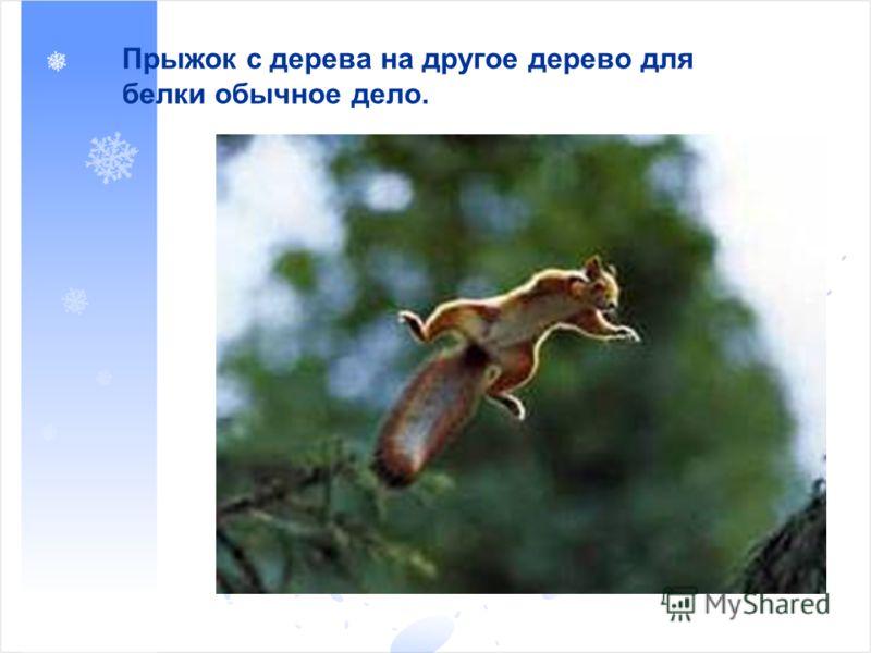 Прыжок с дерева на другое дерево для белки обычное дело.