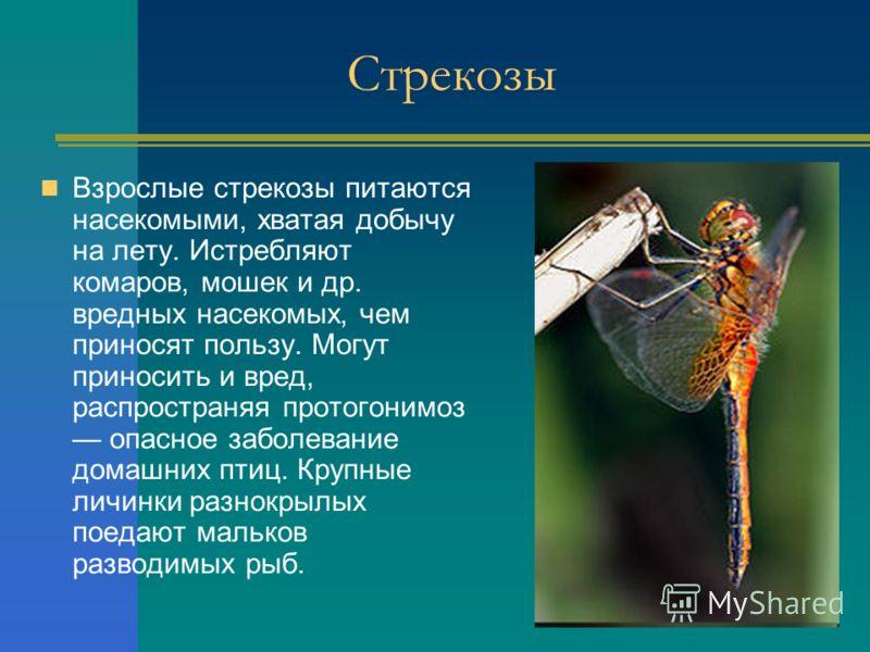 Стрекозы Взрослые стрекозы питаются насекомыми, хватая добычу на лету. Истребляют комаров, мошек и др. вредных насекомых, чем приносят пользу. Могут приносить и вред, распространяя протогонимоз опасное заболевание домашних птиц. Крупные личинки разно