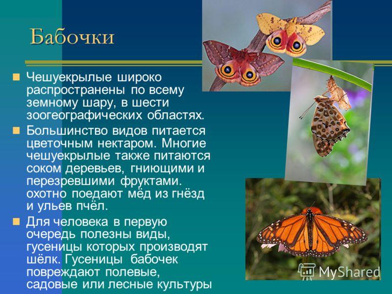Бабочки Чешуекрылые широко распространены по всему земному шару, в шести зоогеографических областях. Большинство видов питается цветочным нектаром. Многие чешуекрылые также питаются соком деревьев, гниющими и перезревшими фруктами. охотно поедают мёд