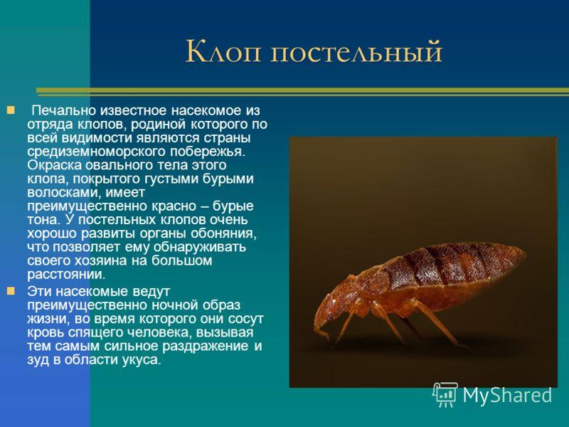Клоп постельный Печально известное насекомое из отряда клопов, родиной которого по всей видимости являются страны средиземноморского побережья. Окраска овального тела этого клопа, покрытого густыми бурыми волосками, имеет преимущественно красно – бур