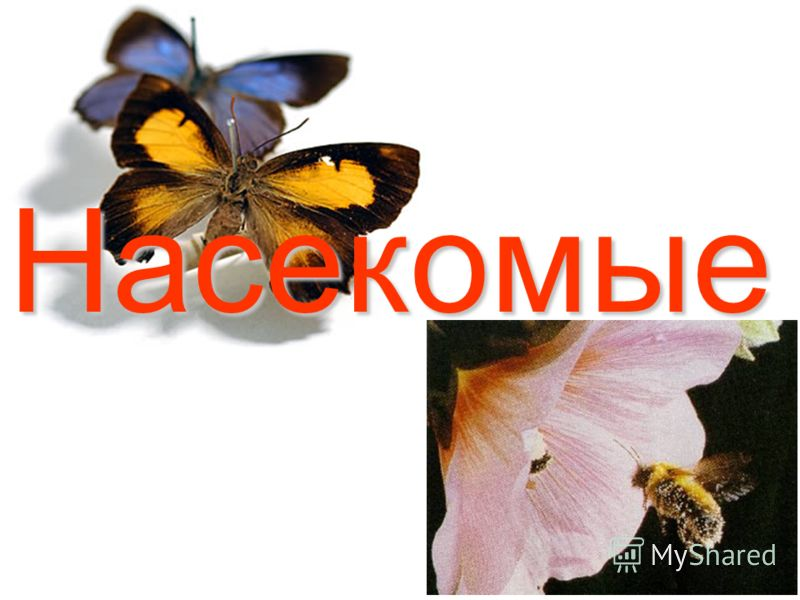 Насекомые у всех насекомых шесть ног у