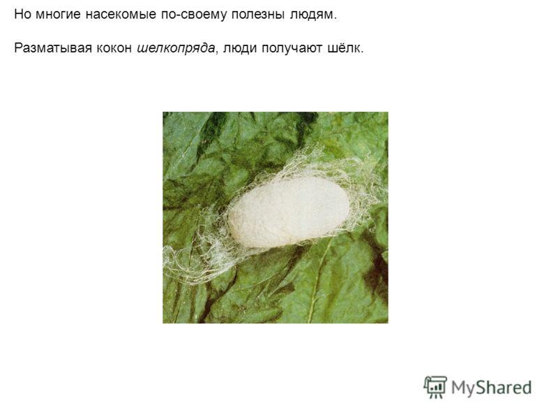 Но многие насекомые по-своему полезны людям. Разматывая кокон шелкопряда, люди получают шёлк.
