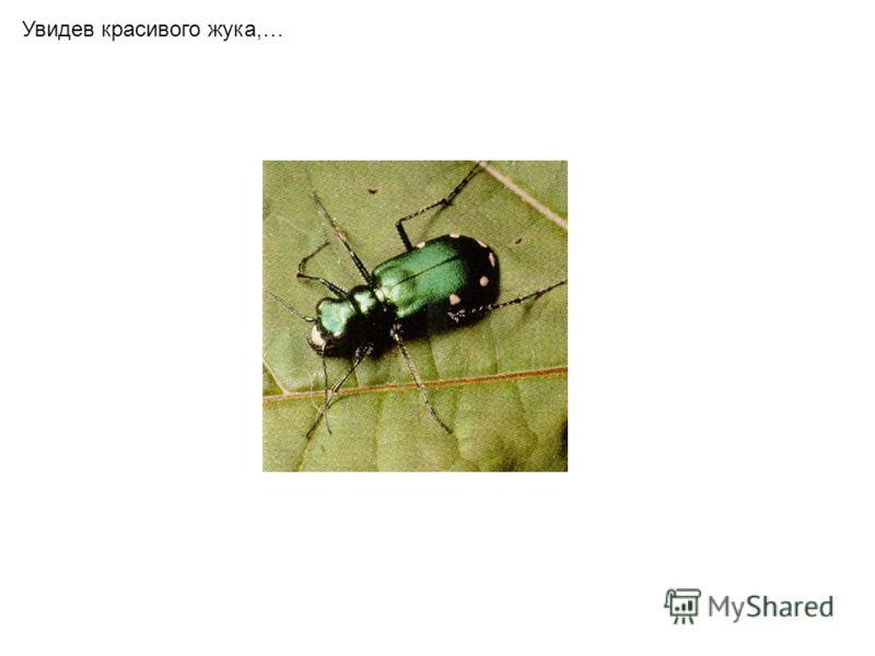 Увидев красивого жука,…