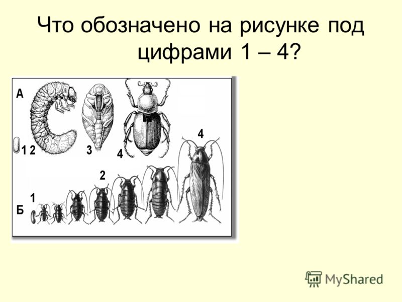 Что обозначено на рисунке под цифрами 1 – 4?