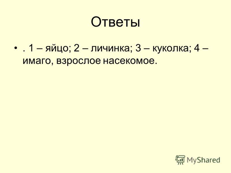 Ответы. 1 – яйцо; 2 – личинка; 3 – куколка; 4 – имаго, взрослое насекомое.