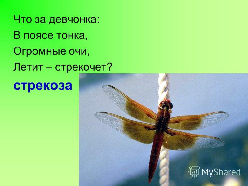Что за девчонка: В поясе тонка, Огромные очи, Летит – стрекочет? стрекоза