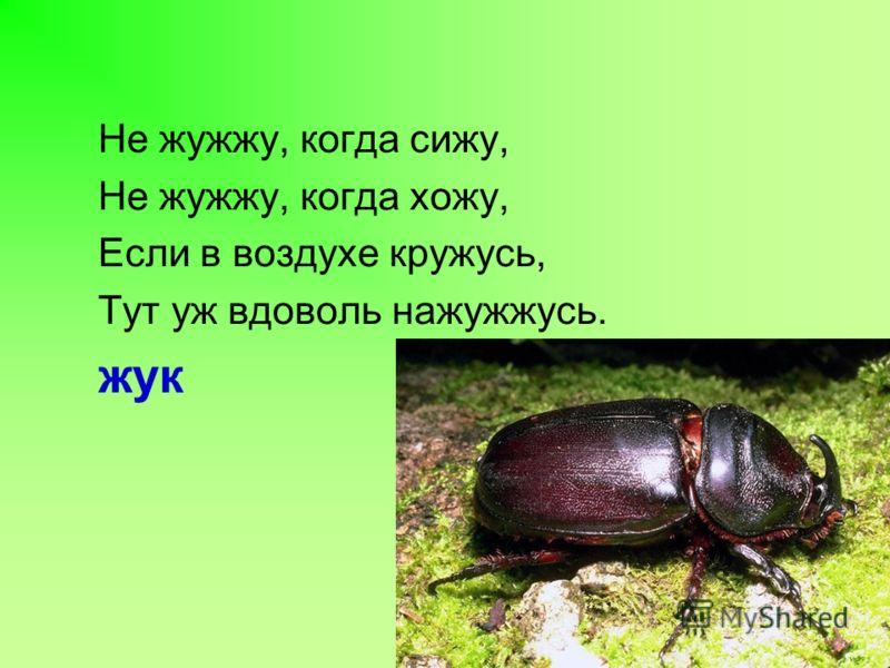 Не жужжу, когда сижу, Не жужжу, когда хожу, Если в воздухе кружусь, Тут уж вдоволь нажужжусь. жук
