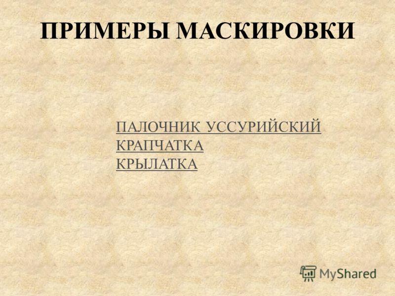 ПАЛОЧНИК УССУРИЙСКИЙ КРАПЧАТКА КРЫЛАТКА ПРИМЕРЫ МАСКИРОВКИ