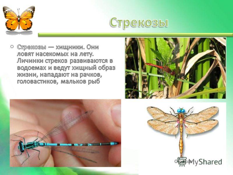 Защита насекомых