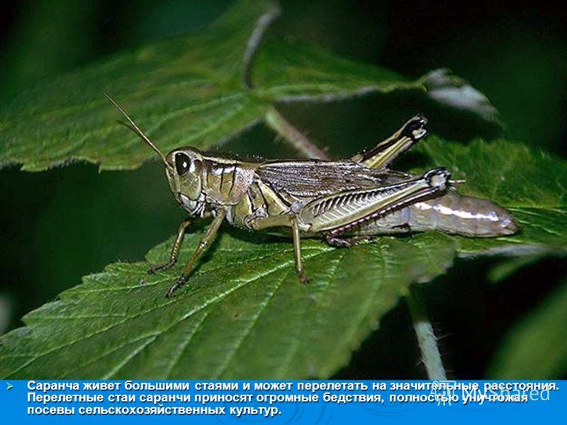 Насекомые насекомые борьба nbsp