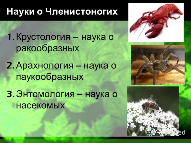 1. Крустология – наука о ракообразных 2. Арахнология – наука о паукообразных 3. Энтомология – наука о насекомых Науки о Членистоногих
