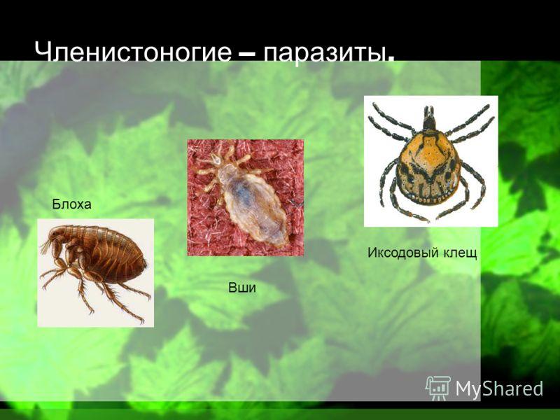 паразиты в организме человека симптомы лямблии