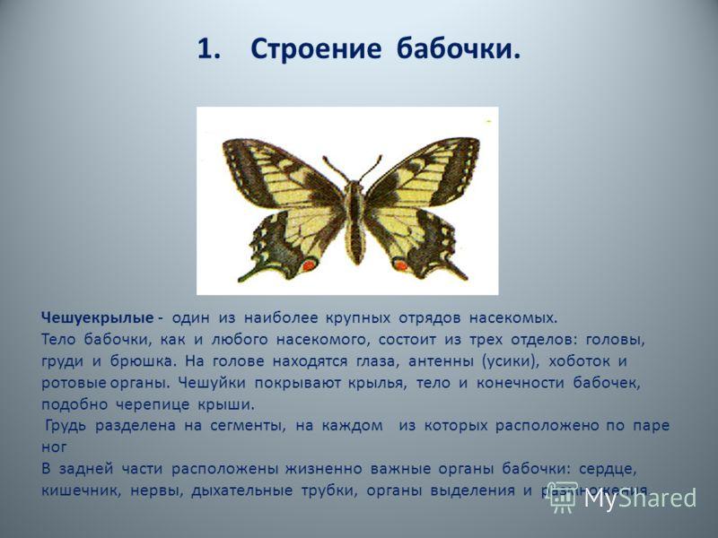 1. Строение бабочки.. Чешуекрылые - один из наиболее крупных отрядов насекомых Тело бабочки, как и любого насекомого, состоит из трех отделов: головы, груди и брюшка. На голове находятся глаза, антенны (усики), хоботок и ротовые органы. (Приложение 1