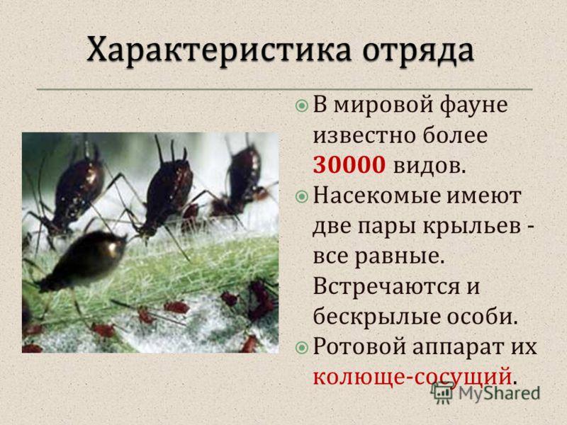 В мировой фауне известно более 30000 видов. Насекомые имеют две пары крыльев - все равные. Встречаются и бескрылые особи. Ротовой аппарат их колюще - сосущий.