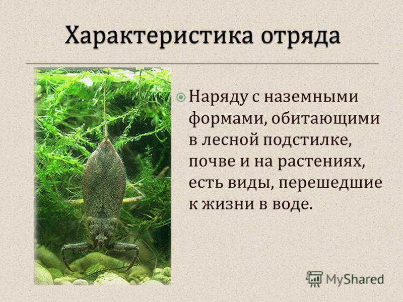 Наряду с наземными формами, обитающими в лесной подстилке, почве и на растениях, есть виды, перешедшие к жизни в воде.
