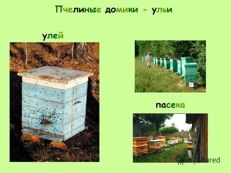 Пчелиные домики - ульи пасека улей