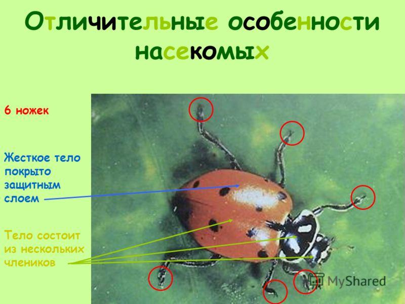 Отличительные особенности насекомых 6 ножек Жесткое тело покрыто защитным слоем Тело состоит из нескольких члеников